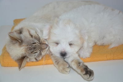 Dogs and Cats living together